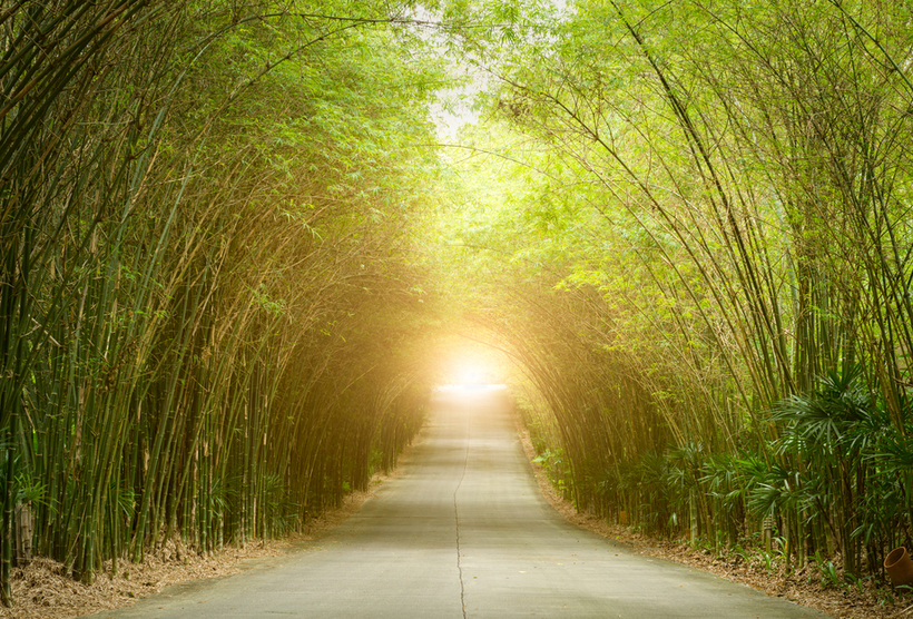 Road through tunnel of bamboo tree forest with light at the end of tunnel
